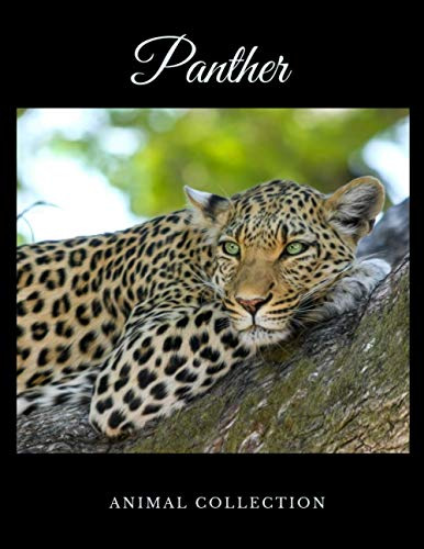 Panther: Animal Notebook, Journal, Diary (110 Pages, Quad Ruled 5 squers per inch, 8,5 x 11)
