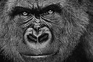 CU.RONG Gorilla Art Print on Canvas,Wall Decor Poster 24x36 inches