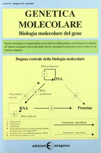 Genetica molecolare. Biologia molecolare del gene