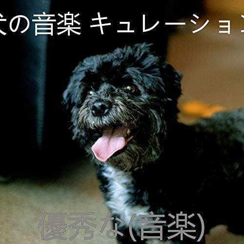 犬の音楽 キュレーション