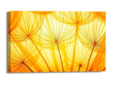 Klebefieber Leinwandbild Pusteblume im Sonnenlicht B x H: 90cm x 60cm