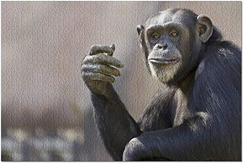 ACCYT HD Chimpancé Mirando a la cámara con expresión pensativa 9003657 (¡Rompecabezas de 1000 Piezas Premium de 19x27 Hecho en EE. UU.!)