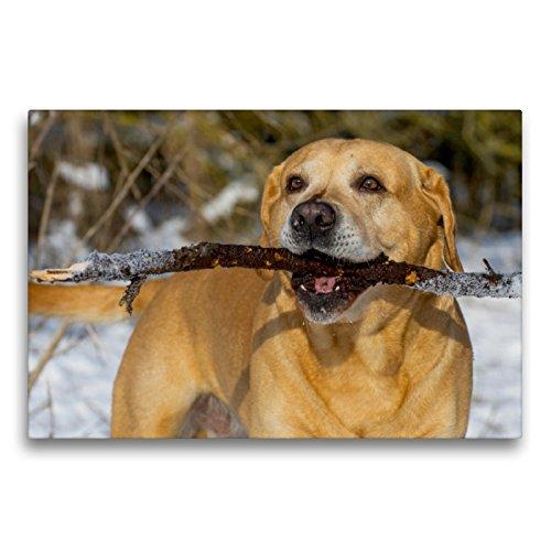 Labrador Retriever – un corazón sobre 4 patas., 75x50 cm