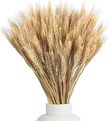 100PCS Natural Dried Wheat Stalks Decor for Wedding Home Office Table Kitchen Decoration(15.7 Inches) (Primary Color)