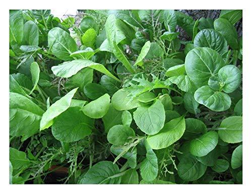 Asiatische Kräutermischung - 400 Samen