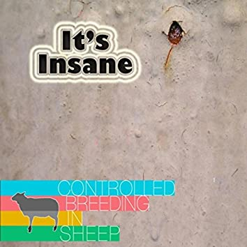 It's Insane