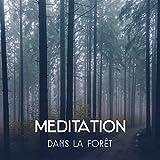 Meditation dans la forêt - Musiq...