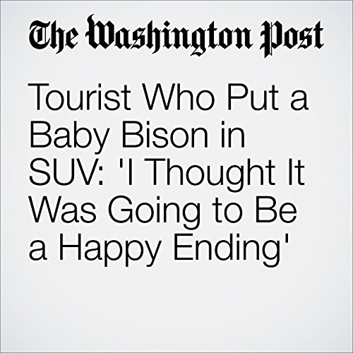 Tourist Who Put a Baby Bison in SUV: 'I Thought It Was Going to Be a Happy Ending' cover art