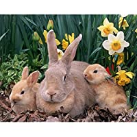 5D DIYダイヤモンド絵画動物ウサギの花ラインストーン刺繡セットダイヤモンドモザイク画像壁画モザイク絵画A3 40x50cm