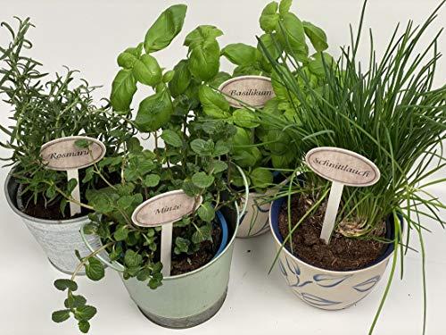 bachmayer Einzelne Gartenstecker, z.B. Paprika für Kräuter/Gemüse/Gartenfrüchte im Vintage-Look, Höhe 20 cm, Metall