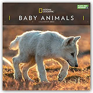 Baby Animals National Geographic Square Wall Calendar 2022