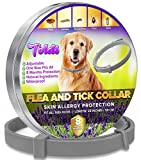 Toldi Flea-Treatment-for-Dogs, Adjustable Flea-Collar-Dogs, 8 Months Protection Flea-and-Tick-Treatment-for-Dogs Puppy Collar Small-Medium-Large Tick & Lice Repellent, Waterproof Spot On