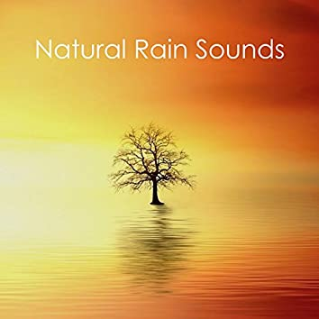 #17 Nature Rain Sounds for Sleep, Meditation and Yoga, Beat Insomnia, Sleep All Night, Anxiety, Study, Natural Sounds Loopable Rain Compilation