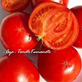 【熊本県産】高級 高糖度 塩トマト 綾 特別なトマト (箱込 約1kg前後)