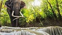 大人のためのZSCTWCL1000ピースパズル-象の滝-最高のパズル