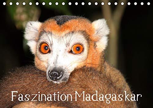 Faszination Madagaskar (Tischkalender 2021 DIN A5 quer)