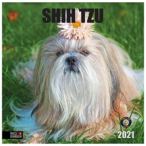 Shih Tzu - 2021 Hangable Wall Calendars by Red Ember Press - 12' x 24' When Open - Thick & Sturdy Glossy Paper - Simply Adorable