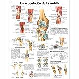 3B Scientific VR3174UU Póster anatómico, la Articulación de la Rodilla