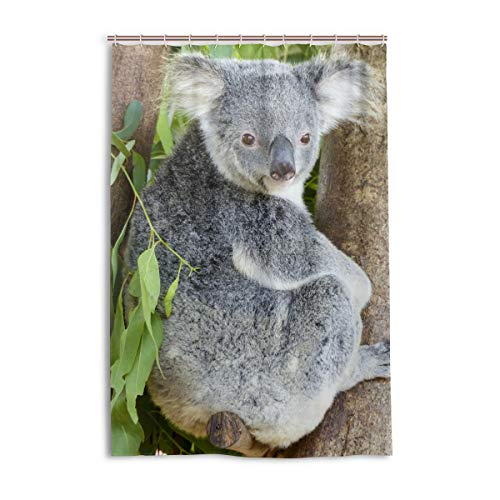 MONTOJ Koala Bär auf Baum, Heimdekoration, Duschvorhang, Stoff, Badezimmer-Dekorationsset mit Haken, langlebig & superwasserdicht, 121,9 x 182,9 cm
