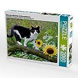 CALVENDO Puzzle Schwarz-weiße Katze mit Sonnenblumen 2000 Teile Lege-Größe 90 x 67 cm Foto-Puzzle Bild von Katho Menden