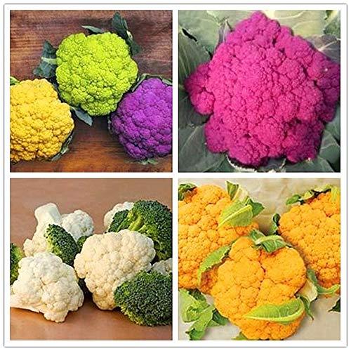 SANHOC 100PCS / Beutel Blumenkohl Pflanze Gesunde Gemüsepflanze Kohl Pflanze Hausgarten Gesunde Köstliche Bepflanzung: 7