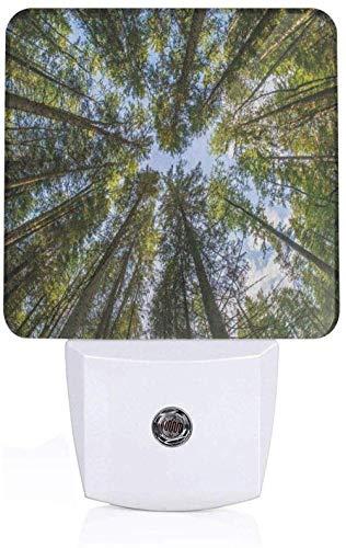 Natuurlijke wilde jungle mos bos kroon boom blad natuur foto kunstwerk drukken vol hemel blauw en bos groen kleuterschool en kleuterschool sensor wandlamp UK_wit