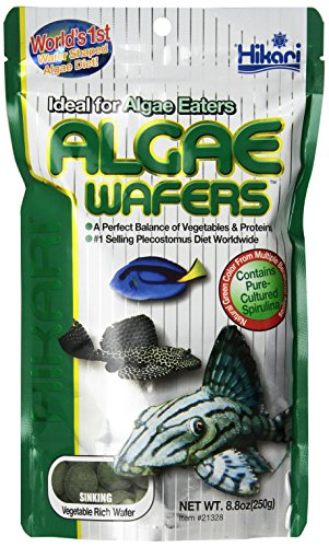 Hikari Usa Inc AHK21328 tropical Algae Wafer 8.8-Ounce