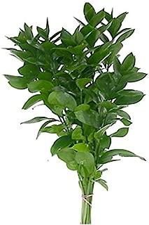 Best italian ruscus greenery Reviews