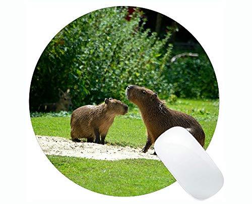 Tierentwurfs-nettes Baby-Schwein Mousepad, Capybara-runde Mausunterlagen