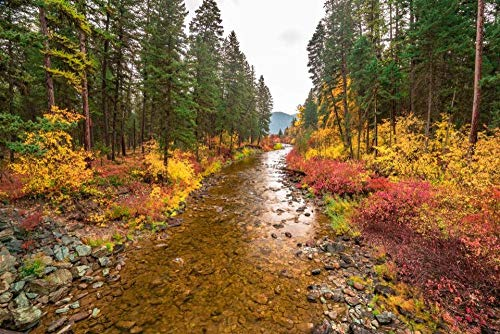 Puzzle 1000 Teile Flachkopfnationalwald In Montana Für Erwachsene Kind Über 14 Jahre