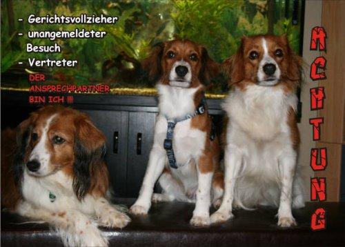 INDIGOS UG - Türschild FunSchild - SE475 DIN A4 ACHTUNG Hund Elo - für Käfig, Zwinger, Haustier, Tür, Tier, Aquarium - aus hochwertigem Alu-Dibond beschriftet sehr stabil