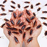 Wirrabilla Pretty Realistic 50PCS Fake Roaches, Fake Cockroaches Great Way to Play a Prank, Faux Cockroaches Lifelike Creepy Perfect for Halloween Project, Tricking People, Kid Playing