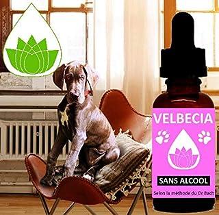 Velbecia® - Fleurs de Bach Animaux stresses (chats, chiens) SANS ALCOOL (30 ml)