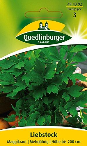 Liebstock, Maggikraut, 1 Tüte Samen