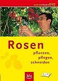 Rosen - Pflanzen, pflegen, schneiden
