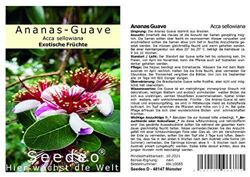 Seedeo® Ananas Guave (Acca sellowiana) 40 Samen
