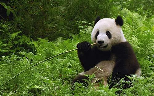 Rompecabezas Para Adultos Rompecabezas De Madera De 1000 Piezas Puzzle De Panda Gigante Animal Comiendo Bambú Para Adolescentes Y Adultos, Muy Buen Juego Educativo