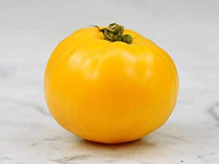 Mountain Gold Tomato Seeds - Bears delicious Yellow fruit on and on and on.(50 - Seeds)