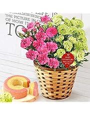 母の日 の プレゼント カーネーション5号鉢 おいもやケーキ洋菓子 花とスイーツ 花鉢 生花 母の日ギフト (2色植え・ピンク&グリーン)
