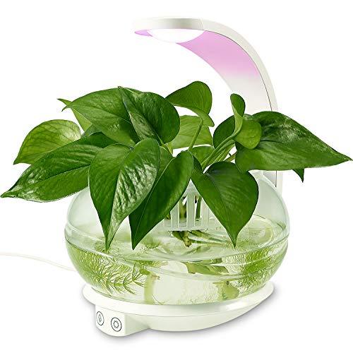 Best Plant Lights for Indoor Gardens