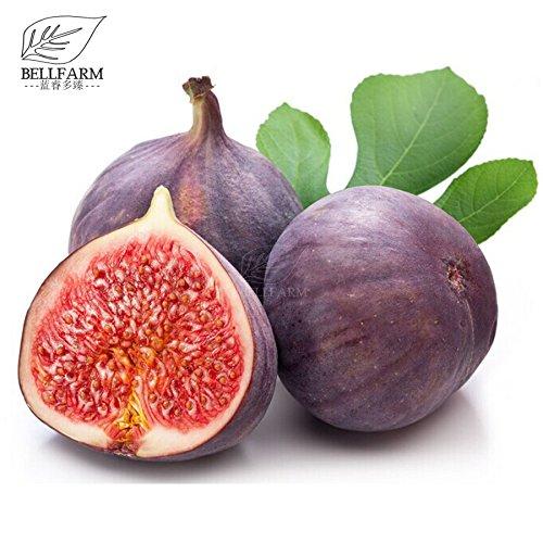 Nouveau géant pourpre Ficus Carica Fig Arbustes, 6+ pcs Graines Bonsai, doux Big bio Fruits pour jardin Plantation