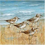 WEXFORD HOME Sandpipers I -Gallery Wrapped Canvas Art Print, 16X16, Multicolor