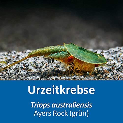 AQ4Aquaristik Triops australiensis Ayers Rock (grün) RARITÄT (Zuchtansatz, ca. 100-250 Urzeitkrebs-Eier) mit Anleitung