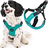 Gooby Escape Free Sport Harness - Turquoise, Medium - No Pull Step-In Patented Neoprene Small Dog Harness, Four-Point Adjustment - Perfect on the Go Dog Harness for Medium Dogs No Pull and Small Dogs