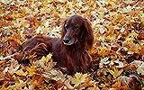 LFNSTXT Rompecabezas con temática animal, animales otoño perros hojas caídas set irlandés, 1000 piezas, 29.5 x 19.7 pulgadas