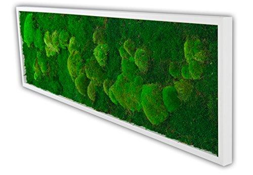 Moosbild Wandbild mit Moos Kugelmoos Moosplatte Pflanzenbilder Moosbilder versch. Maße günstig (140x40 cm, weiß)
