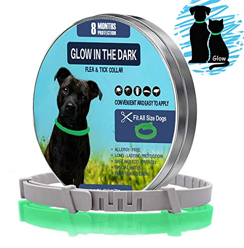 ZSIIBO Flea Collar Dogs Flea Treatment for Dogs Collar Lights for the Dark Waterproof Adjustable Size 8 Months Protection Natural Essential Oils Cat Flea Collars