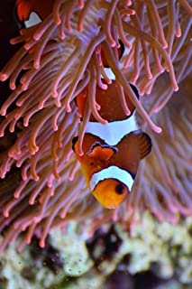 Anemone and a Clown Fish Journal: Take Notes, Write Down Memories in this 150 Page Lined Journal