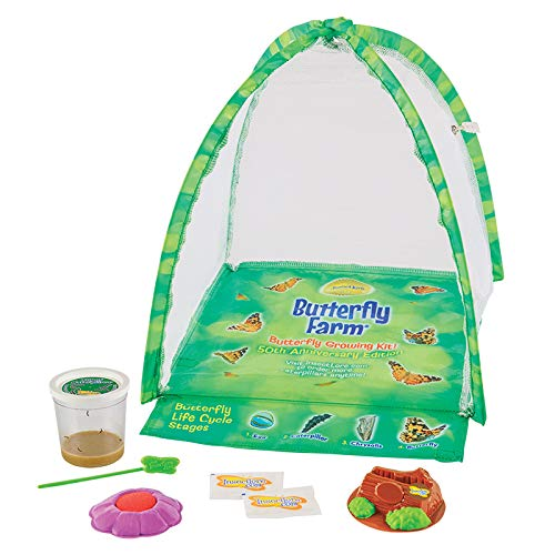 Product Image of the Insect Lore Live Butterfly Growing Kit Toy - 5 Caterpillars to Butterflies -...