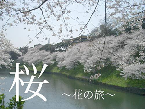 桜: ~花の旅~